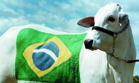 boi-bandeira-brasil