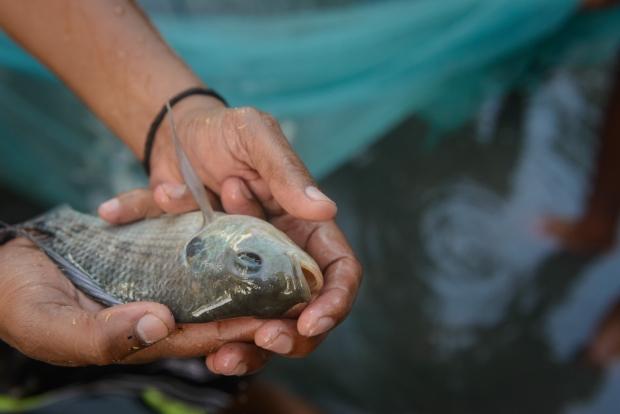 peixe 2