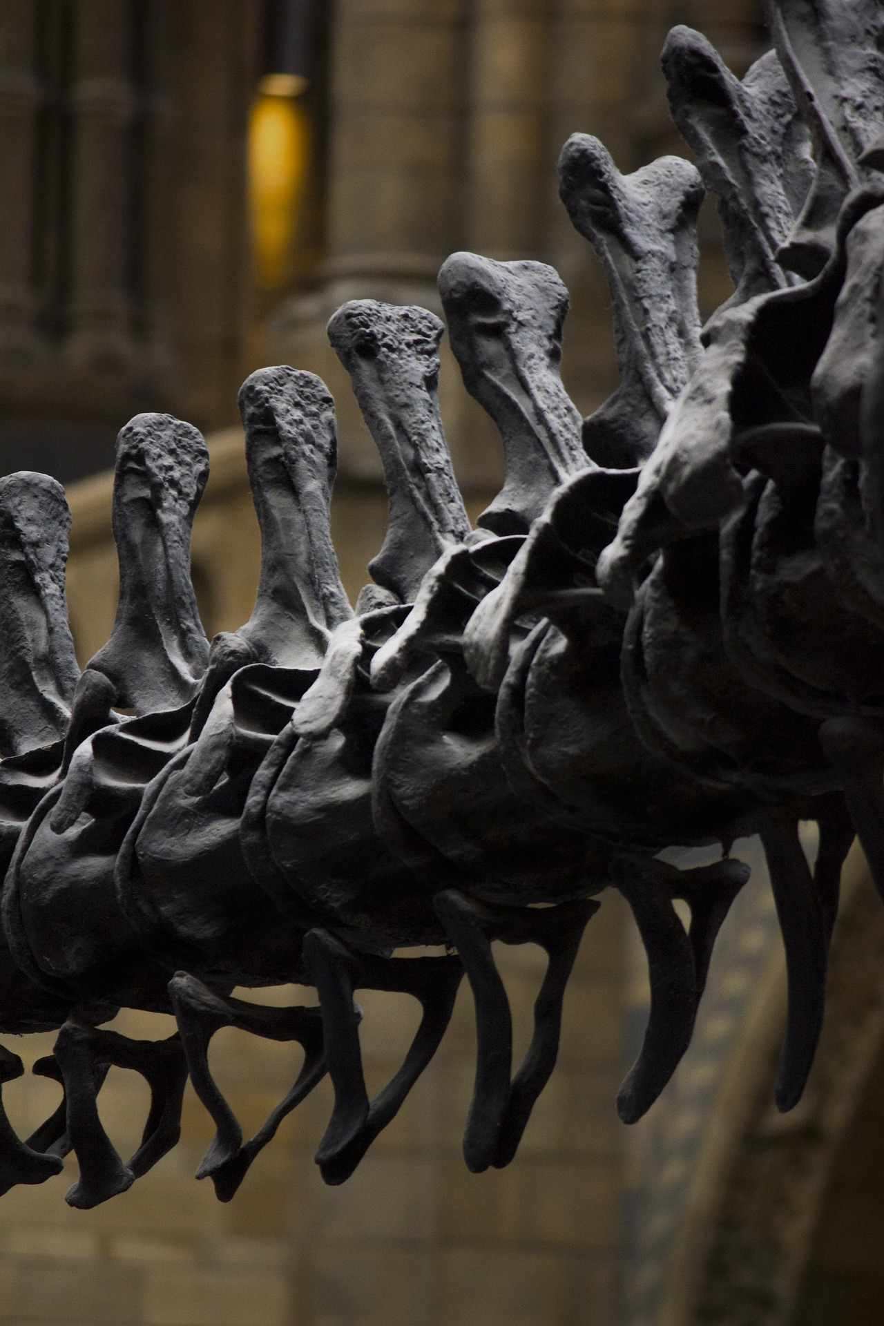dinossauro; osso; historia