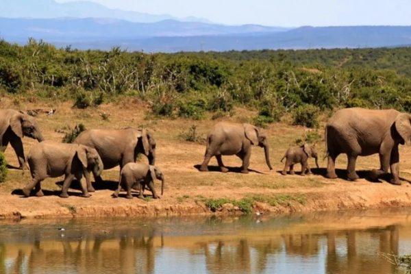 elefantes-Pixabay