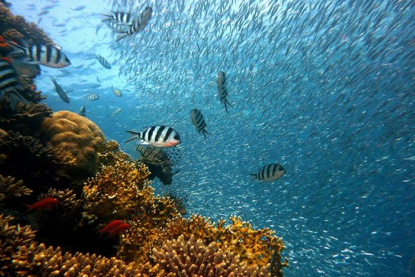 mar; ocecano; coral; corais; peixe;